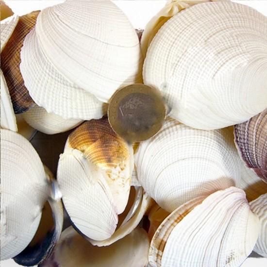 Bug Atan Lıke Codakıa Kiloluk Deniz Kabuğu (1 KG)