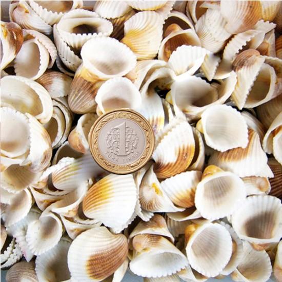 Clam Rose Cochles - Renkli Kiloluk Deniz Kabuğu (1 KG)
