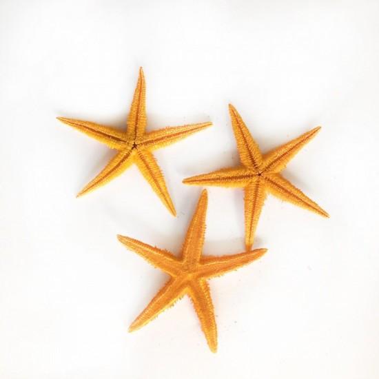 Deniz Yıldızı 3-4  Turuncu (100 Adet)