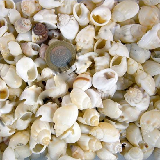 Frogshell Kiloluk Deniz Kabuğu (1 KG)
