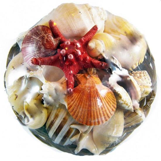 Fruit Of The Sea 12 İnç