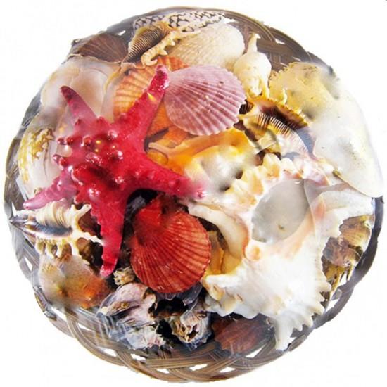 Fruit Of The Sea 35 CM