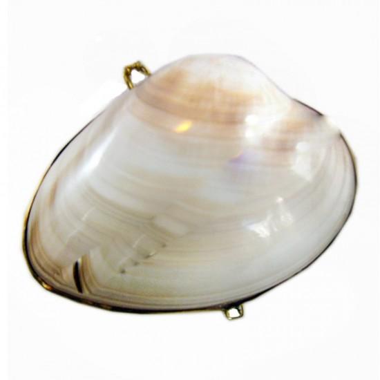 Pearlızed Clam Kabuk Cüzdan