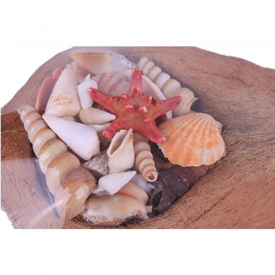 Coco Kabuk Sepeti 18-20 cm Arası