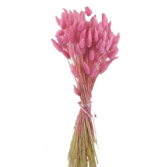 Kuru Çiçek Doğal Kurutulmuş Pamuk Otu Çiçeği 15 GR (1 Demet)
